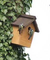 Robin And Garden Birds Nesting Boxes