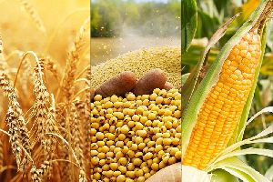 Agro Commodities