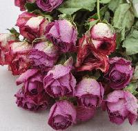 Dry Roses