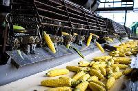 Agro Processing Plants