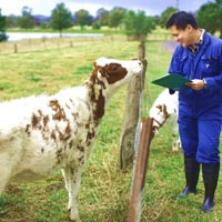 Animal Breeding Service