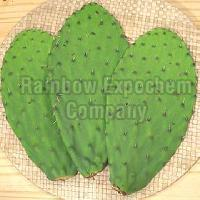 Prickly Pear Leaves