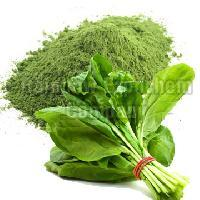 Spray Dried Spinach Powder