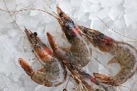 Frozen Jhinga Fish