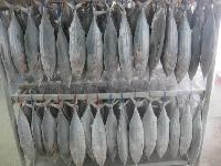 Frozen Yellowfin Tuna Fish