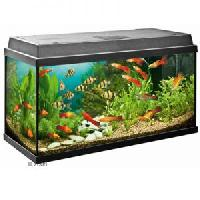 Fish Aquarium Products