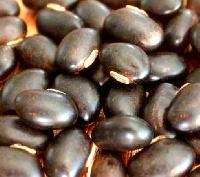 Konch Seed (mucuna Pruriens)