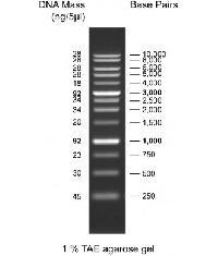1Kb DNA Ladder