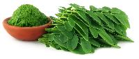 Drumstick Leaves Powder