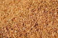 1121 Basmati Rice Seeds