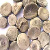 Kuchla Seeds