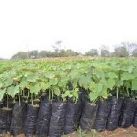 Nursery Plant Bags