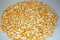 Animal Feed Corn