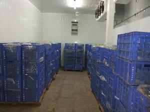 Ice Cream Cold Storage