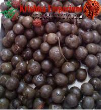 Rudraksha Fruit Of Nepal