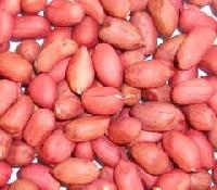 Peanut Kernels