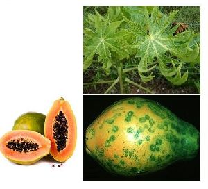 BCX Rimox Eco Friendly Viricide