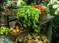 Agro Based Commodities