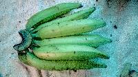 Fresh Green Nendran Banana