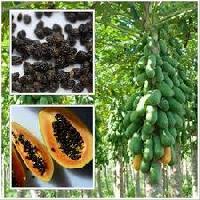 Pappaya Seeds