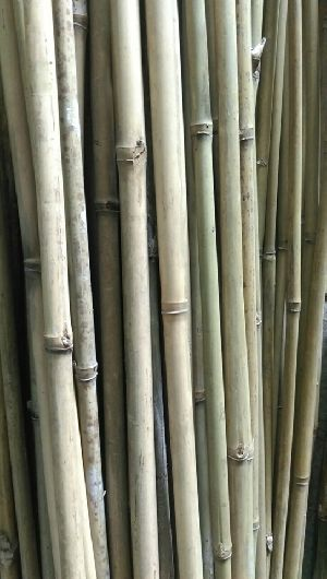 Bamboo Pole Suppliers ~ Vietnam bamboo poles from vietnamese
