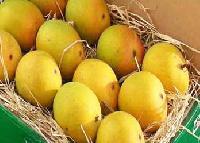 Fresh Mango, Alphanso Mango