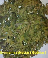 Gudmar Leaves ( Gymnema Leaves)