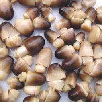Paddy Straw Mushroom