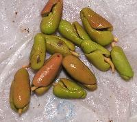 Cloves Seeds
