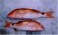 Chilled Red Snapper Fish
