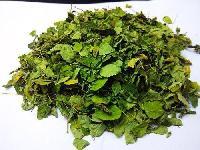 Dried Gymnema Leaves