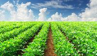 Agro Farming Services