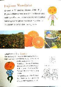 Fresh Japanese Orange 02