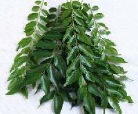 Fresh Curry Leaves
