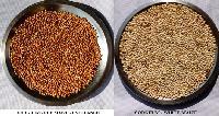 Sorghum - White & Red - Jowar - Cholam