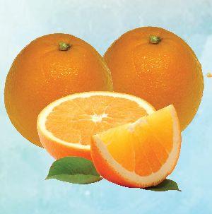 Baladi Orange 01