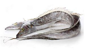 Frozen Ribbon Fish