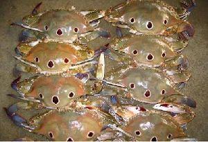 Frozen 3 Spot Crabs