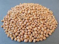 Arhar Seed