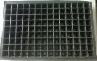 Seedling Trays