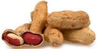 Raw Peanut