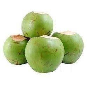 Tender Coconut Suppliers & Wholesalers | Buy Hara Nariyal
