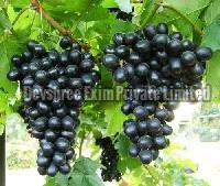 Fresh Black Grapes Manufacturer In India