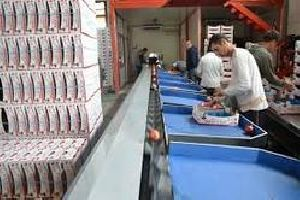 Fruit Grading Processing & Packaging Line