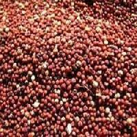Finger Millets Seed