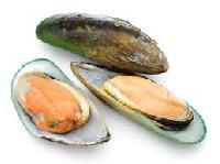 New Zeland Green Shell Mussels