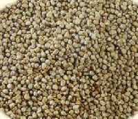 Bajra Cattle Feed Seeds