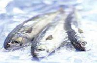 Chilean Sea Fish