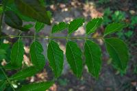 Neem Insecticide