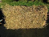 10 Kg Alfalfa Hay